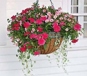 Ампельные цветы для сада