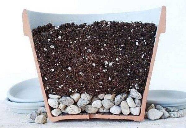 Почва для антуриума в домашних условиях
