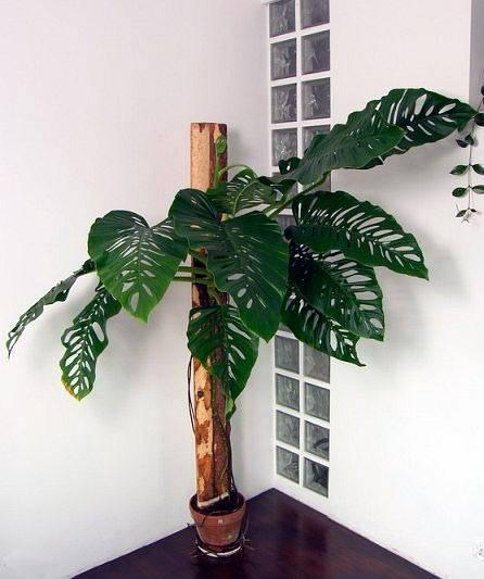 Лучшие растения для офиса