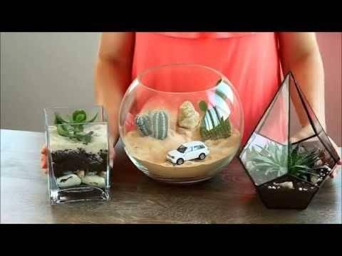 Суккуленты в аквариуме