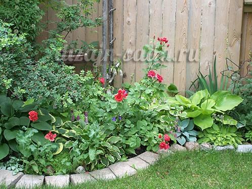 Уход за хостами в саду