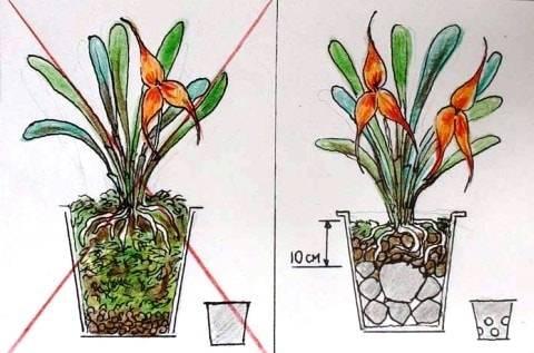 Как правильно сажать орхидею в горшок
