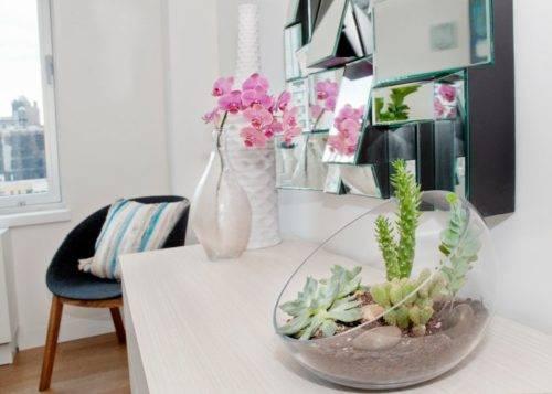 Уход за суккулентами в домашних условиях