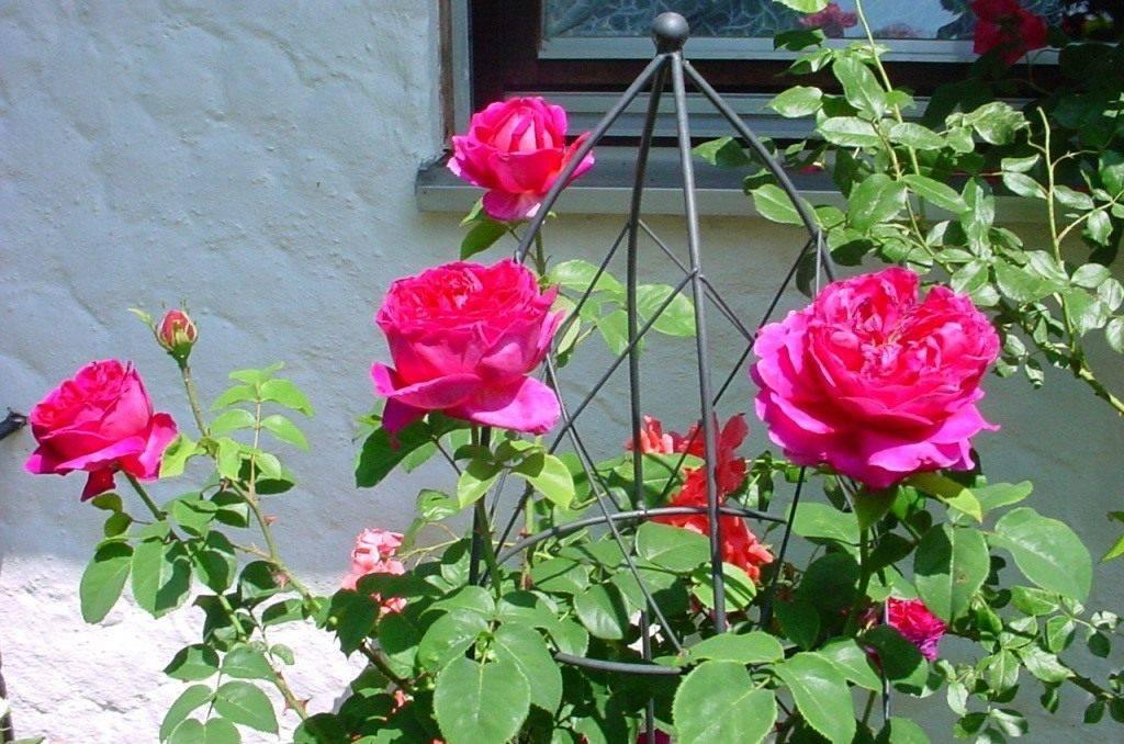 Что дороже пионы или розы