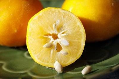 На чем растут лимоны