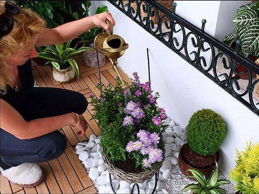 Можно ли поливать цветы пивом