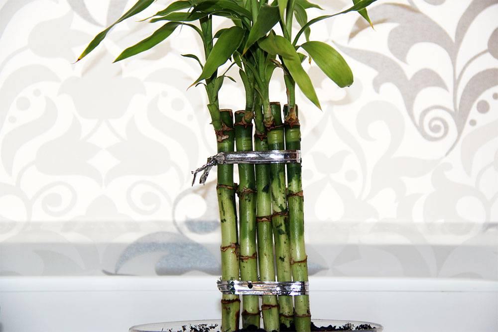 Как закрутить бамбук