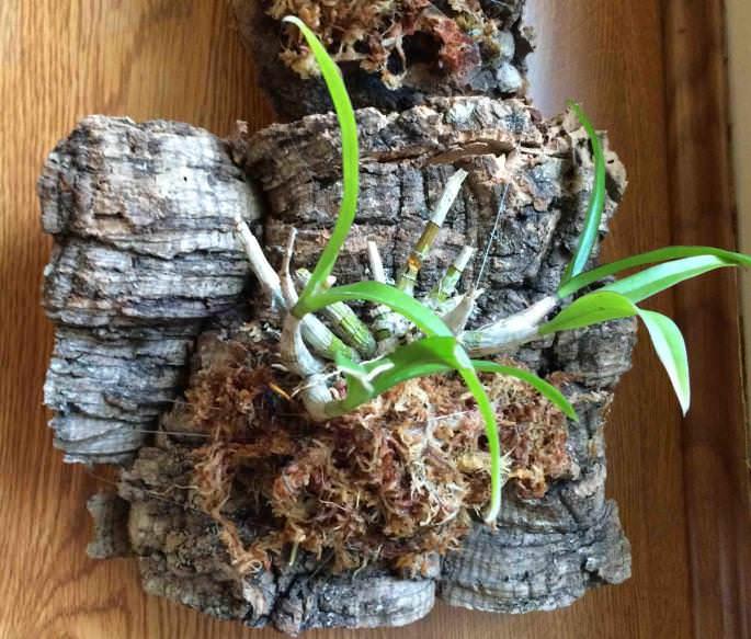 Какая кора нужна для орхидей