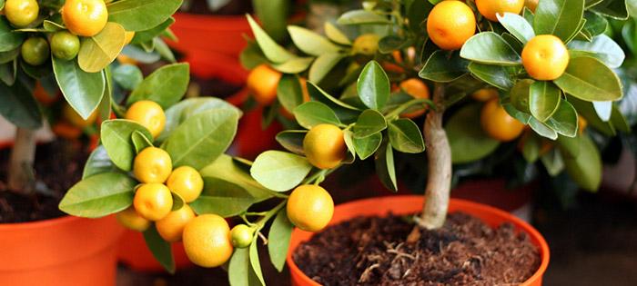 Удобрение для цитрусовых