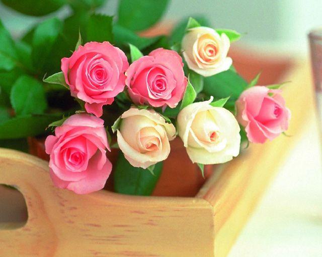 Если мужчина дарит белые розы