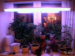 Лампы для подсветки растений