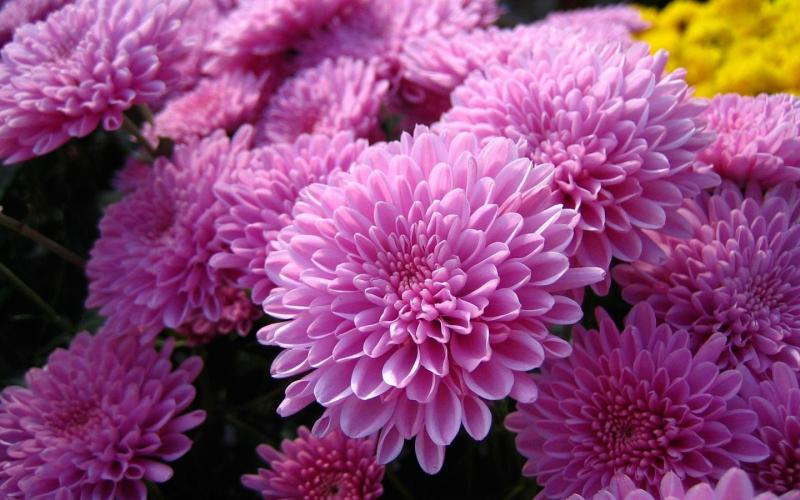 Цветок одиночества
