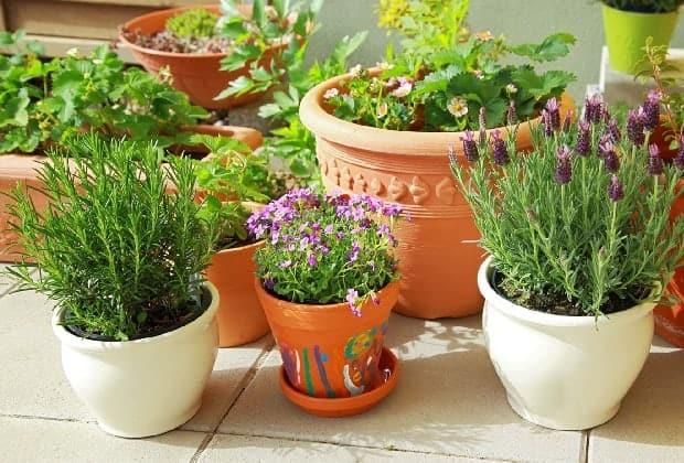 Удобрения для цветения комнатных растений