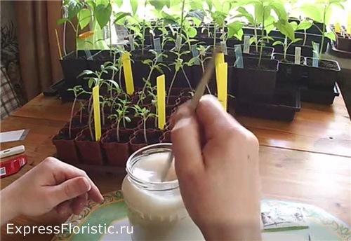 Как удобрять дрожжами цветы